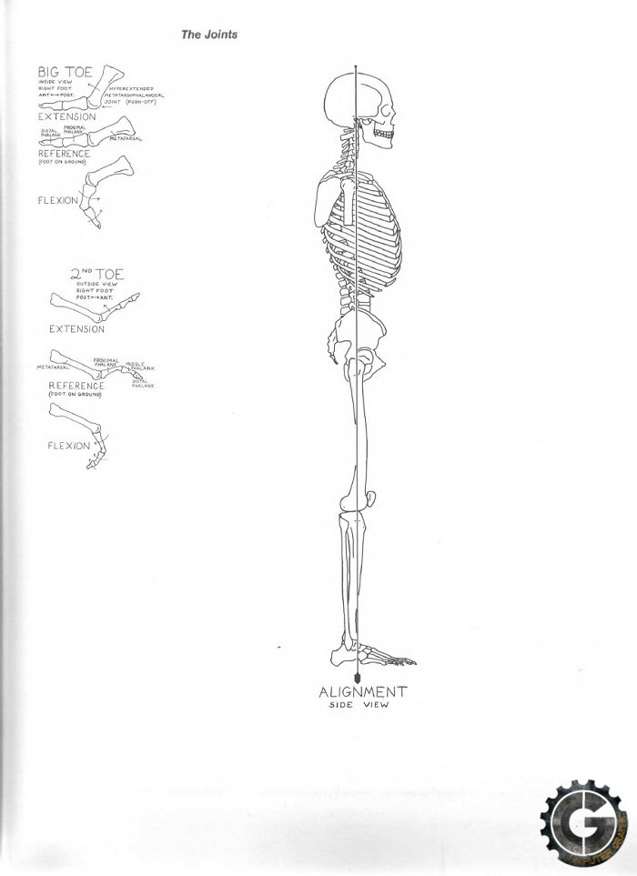 Eliot Goldfinger Human Anatomy For Artists Pdf Download Animal
