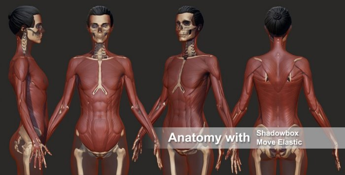 آموزش ZBrushWorkshops Anatomy 2.0 R2 - Master Anatomy with Ryan Kingslien