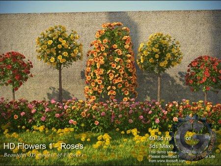 مدل های سه بعدی 3dMentor - HQ Flowers 1 - Roses